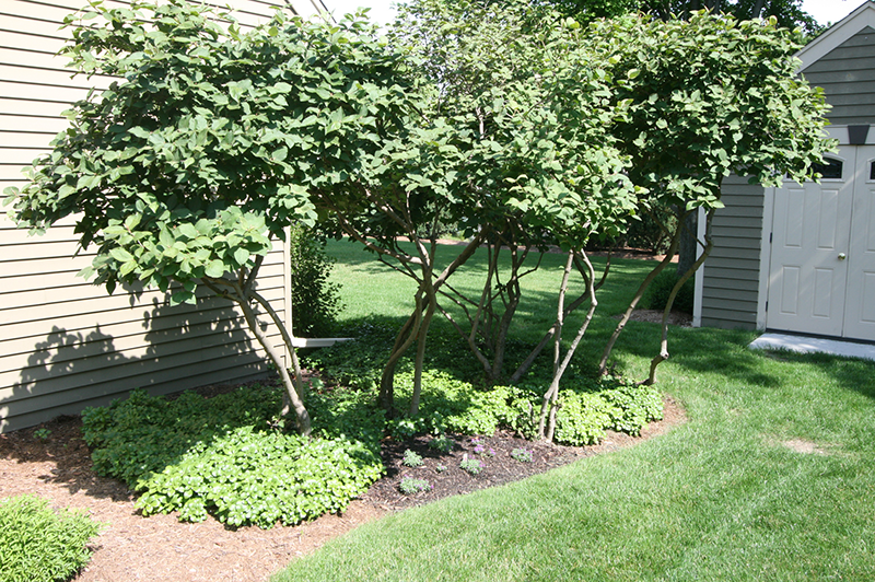 landscaping, lawn care, plantings